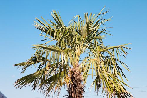 palmen im wake park wolfsburg